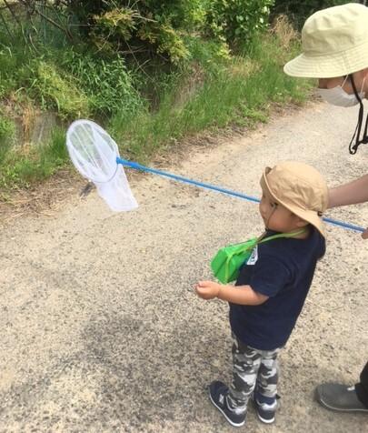 牧場で昆虫採集